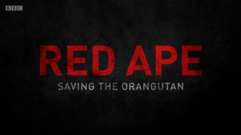 Спасти орангутана / Red Ape. Saving the Orangutan (2018)