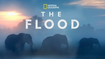 Потоп / The Flood (2019)