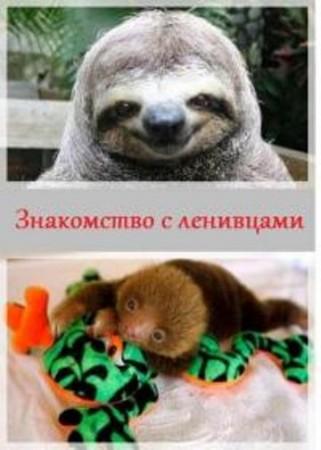 animal planet знакомство с ленивцами