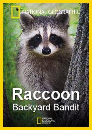 raccoon backyard bandit 2014