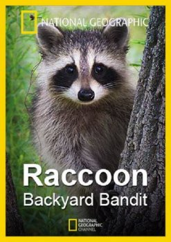 Нашествие енотов / Raccoon Backyard Bandit (2014) National Geographic
