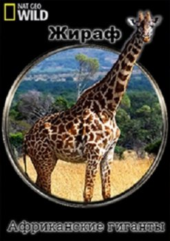 Жираф: африканские гиганты / Giraffe. African Giant (2015) National geographic