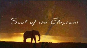 ������������ �����: ���� ������� / Soul of the Elephant (2015)