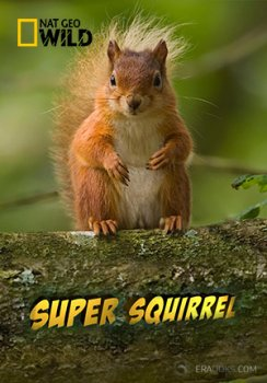 Супер белки / Super Squirrel (2014) National Geographic