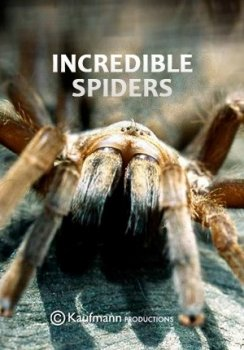 Удивительные пауки / Incredible Spiders (2015) National Geographic